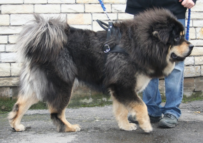 Eine Familie Kauft Einen Hund Und Merkt 2 Jahre Lang Nicht Dass Es
