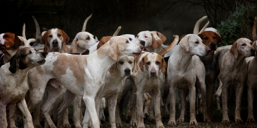 Hunde Sterben Norwegen